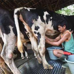 Apakah boleh minum susu mentah? Kenapa harus susu dipasteurisasi?